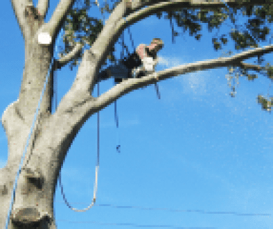 Complete PPE for Tree Surgeons